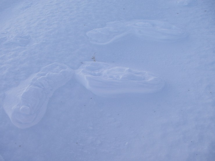 Compressed snow footprints left by wind erosion