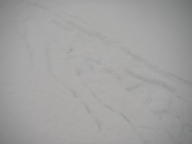 Interesting water runnel patterns on the surface of the snow.